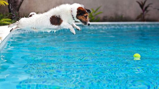 Hunde-livet er ikke en sort-hvid film. De kan godt se farver