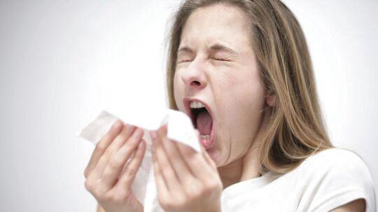 Atjuuuu... Pollensæsonen betyder for allergikere højsæson for nys, snot og røde næse.