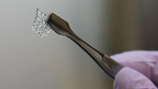 En forsker med det gitter der omslutter den kunstige 3D skabte æggestok.
