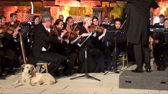 En hund gik pludseligt på scenen, mens Vienna Chamber Orchestra spillede koncert i Izmir i Tyrkiet fredag.