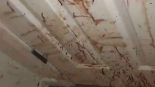 Det var blodige scener fra en horror-film, som amerikanske Tristan Murrin og hans mor kom hjem til torsdag.