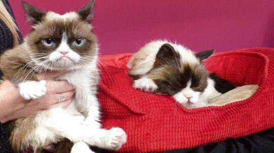 Der kan være en grund til at din kat ser sur ud. Forskere har forsøgt at indkredse hvordan katte kan lide blive kløet.