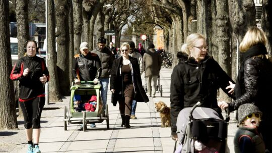 Der er 470 lindetræer fra mellemkrigsårene på Frederiksberg Allé fra Sankt Thomas Plads til runddelen