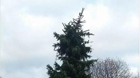 Sådan ser juletræet i Aars ud i år. Borgerne er mildest talt ikke tilfredse.