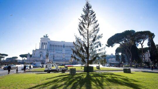 Årets officielle juletræ på Piazza Venezia har fået vrede romere til at beskylde beskylde byens borgmester for at hade julen.