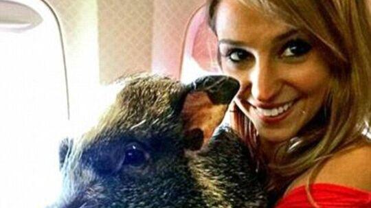 Megan Peabody fra Jomfru Øerne bliver altid nervøs, når hun flyver. Derfor medbringer hun støttegris Hamlet i flyet. Det er ikke altid, at medpassagerne er glade for selskabet.,
