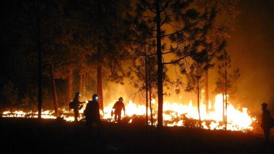 Her er billedet af en anden skovbrand end den, som den 15-årige amerikanske dreng forårsagede med sit fyrværkeri.