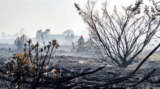En voldsom brand hærger Frederikshåb Plantage og Randbøl Hede mellem Vejle og Billund, fredag den 25. maj 2018. Ifølge Sydøstjyllands Politi brænder to gange fire kvadratkilomter, og branden breder sig øjeblikket mod vest.
