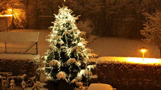 Sådan så julenud i 2009, og også sidste år havde vi hvid jul i Danmark. Det skal vi dog ikke sætte næsen op efter i år.