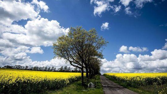 Den nye landbrugslov har gjort det mere attraktivt for eksterne investorer at købe landbrug og landbrugsjord.