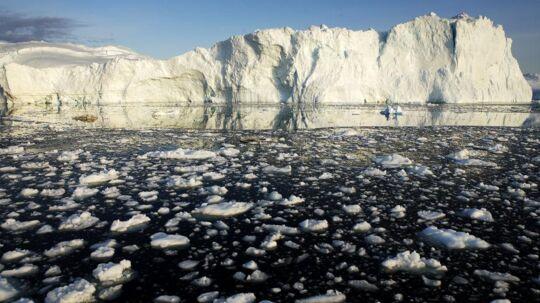 Hvismanfalder i det grønlandske ishav, kan hurtigt blive skæbnesvangert.