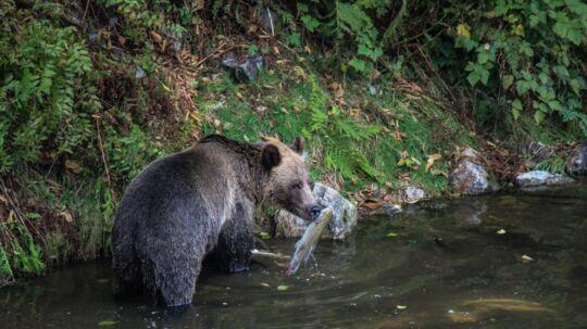 Det er ingen tur i zoologisk have, men man kan alligevel godt få de vilde dyr at se på tæt hold.