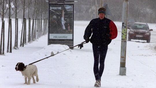 Specielt kortbenede hunde har det svært, når jorden er kold og snedækket.
