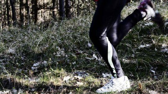 Torsdag fandt en hundelufter et skelet i denne skov ved Tisvilde Hegn.