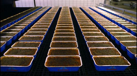 Stryhns fabrik i Roskilde. Der er ingen fare for at varer, som rotterne har været i kontakt med på lageret, er nået ud til forbrugerne. Arkivfoto