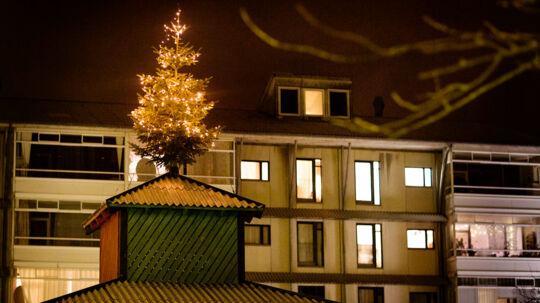 Egedalsvænge i Kokkedal nord for København blev Danmarkskendt, da et muslimsk flertali beboerbestyrelsen sidste år nedstemte den årlige juletræsfest samt juletræet på toppen af beboerbygningen. Træet kom op til sidst, men nu ulmer uroen igenblandtbeboerne idet sociale boligbyggeri.