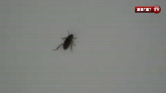 Fire dage i træk dumpede en kakerlak ned i børnenes seng