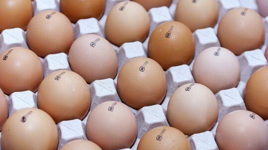 Den succesrige danske produktion af økologiske æg er et af de områder, der kan komme i klemme i kommende nye EU-regler for økologien. Arkivfoto. Scanpix/Henning Bagger