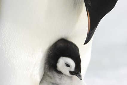 Pingvinmarchen 2
