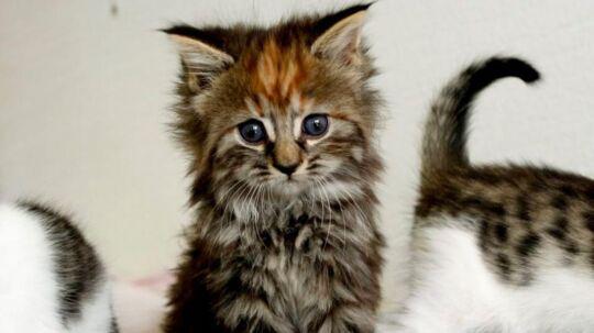 Hvordan kan du vide, om din kat elsker dig? Metro har allieret sig med katteadfærdseksperten Anita Kelsey, der har fundet seks tegn på, at den er glad for dig. Klik dig gennem galleriet for at læse dem.