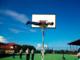 basketplank