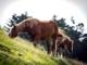 Høstdag med heste