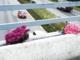 Tysk kvinde dræbt af betonflise på motorvej