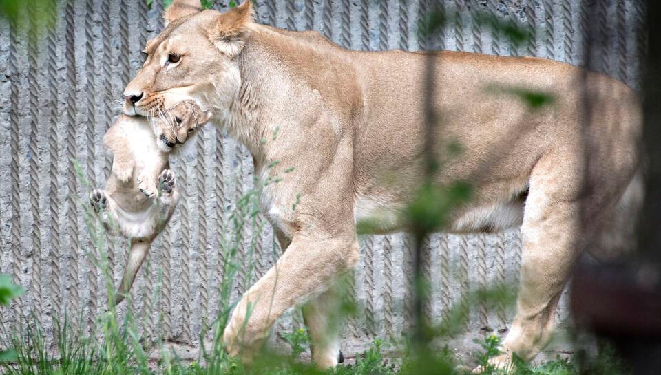 herning zoo første gang