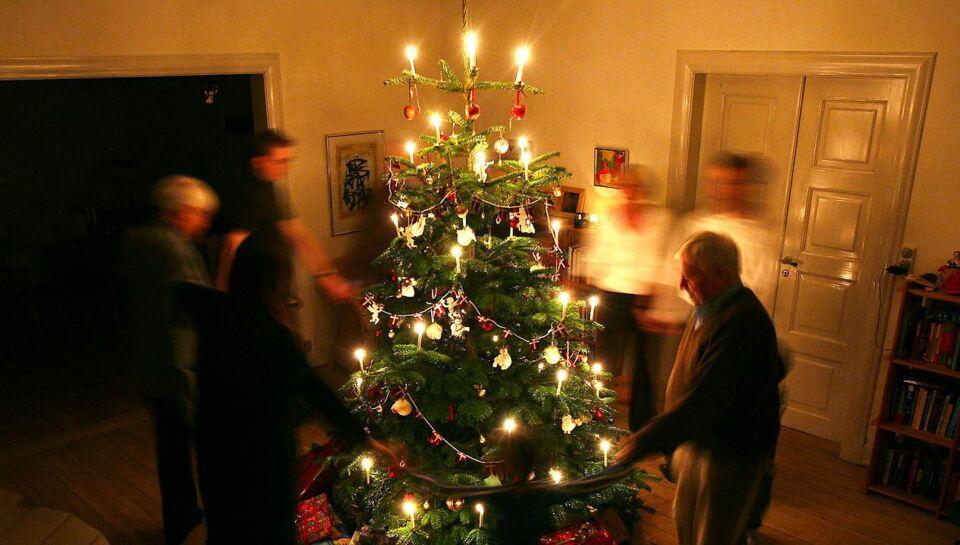 фото семья наряжает елку мультифлора это