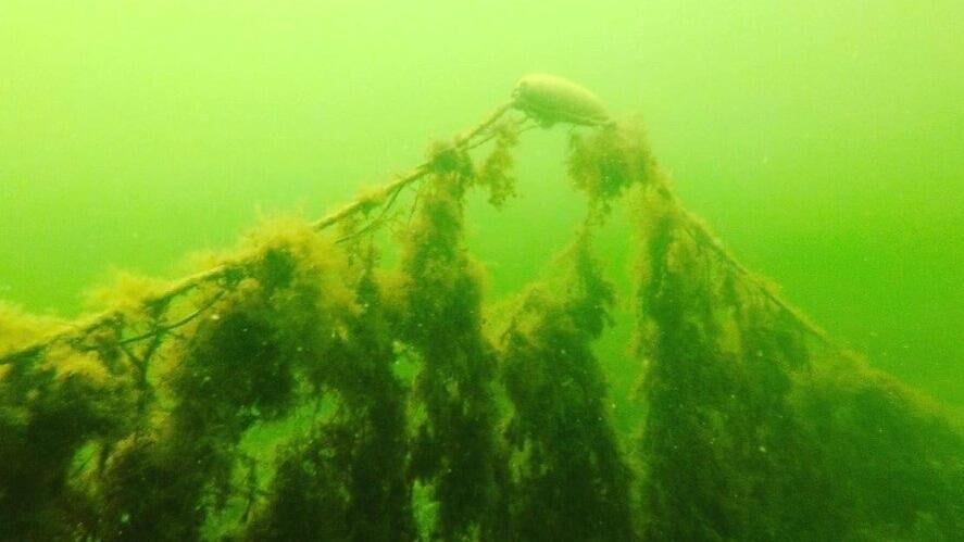 Spøgelsesnet dræber livet i Limfjorden