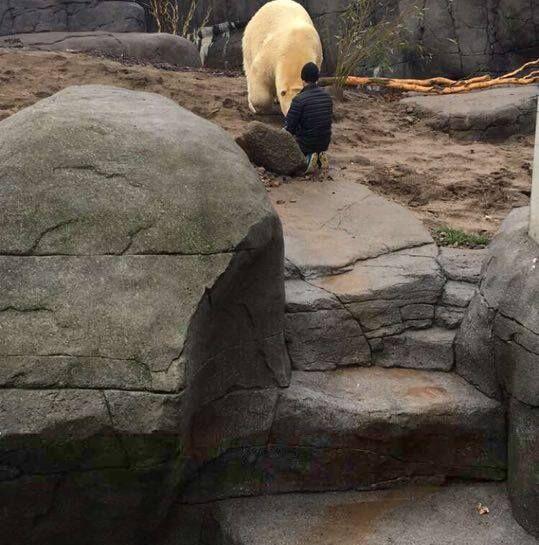 Se Video Fra Dramaet I Zoo Her Møder Manden Den Store Isbjørn Bt